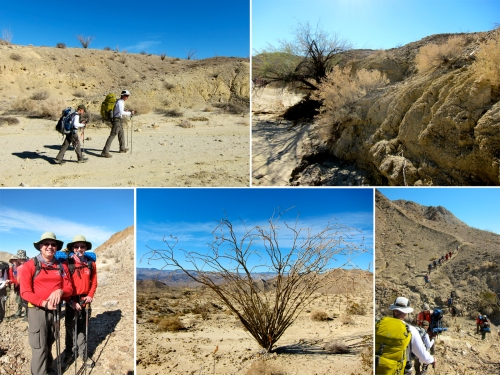 We continue our trek.  Some desert plant life, which survives with almost no rainfall.