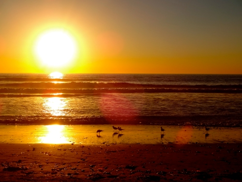 Sunset.Shore birds